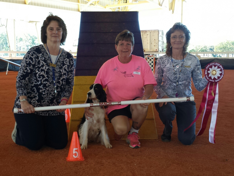 The same lady, in pink shirt kneeling beside black and white springer spaniel, Luci flanked by two female agility one holding red, white and blue rosette award ribbon and white PVC autograph bar.