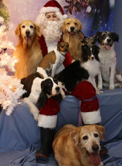A group of eight dogs sitting on and surrounding Santa