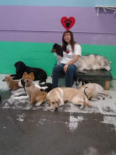 A lady sitting on a wooden bench with nine dogs lying on the floor around her
