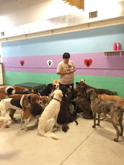 A lady standing in the middle of a mixed group of about 15 dogs looking up at her