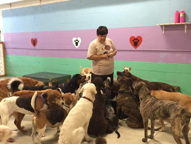 Lady standing in the middle of a mixed group of about 15 dogs looking up at her